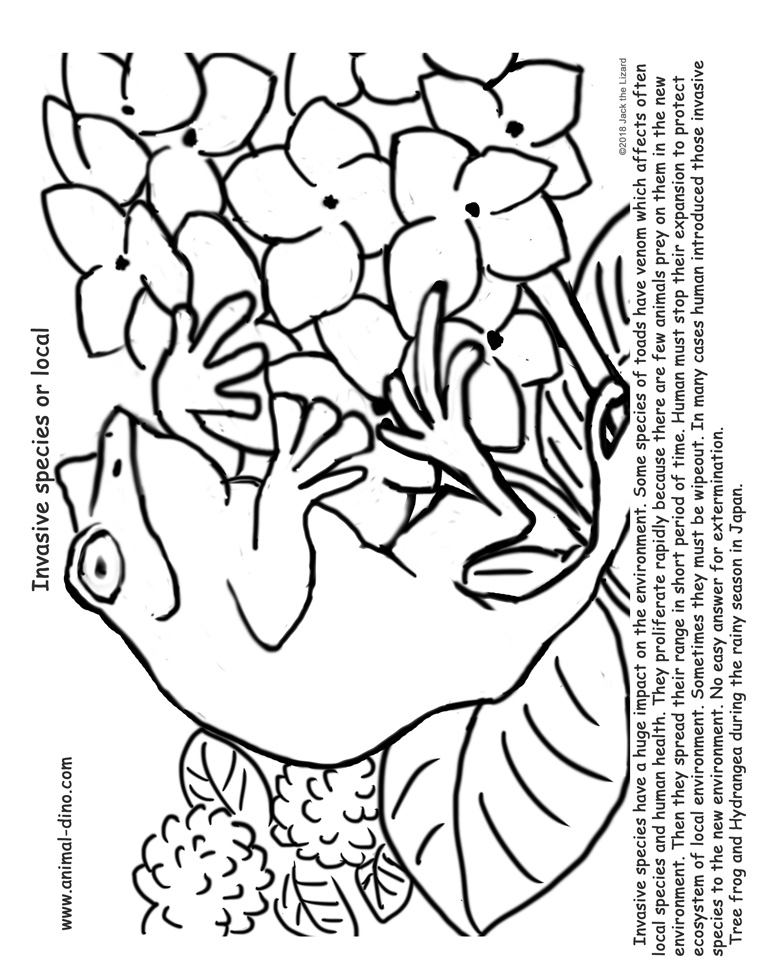 Animal Coloring Page (Frog and Hydrangea) Print Size