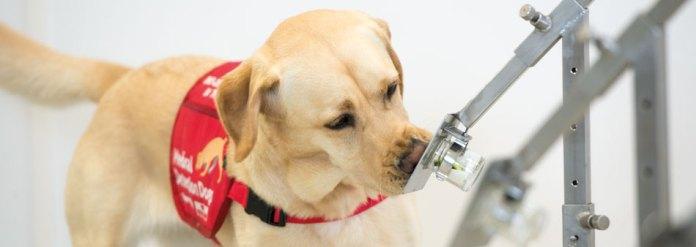 一張含有 狗, 室內, 褐色, 尋找 的圖片  自動產生的描述