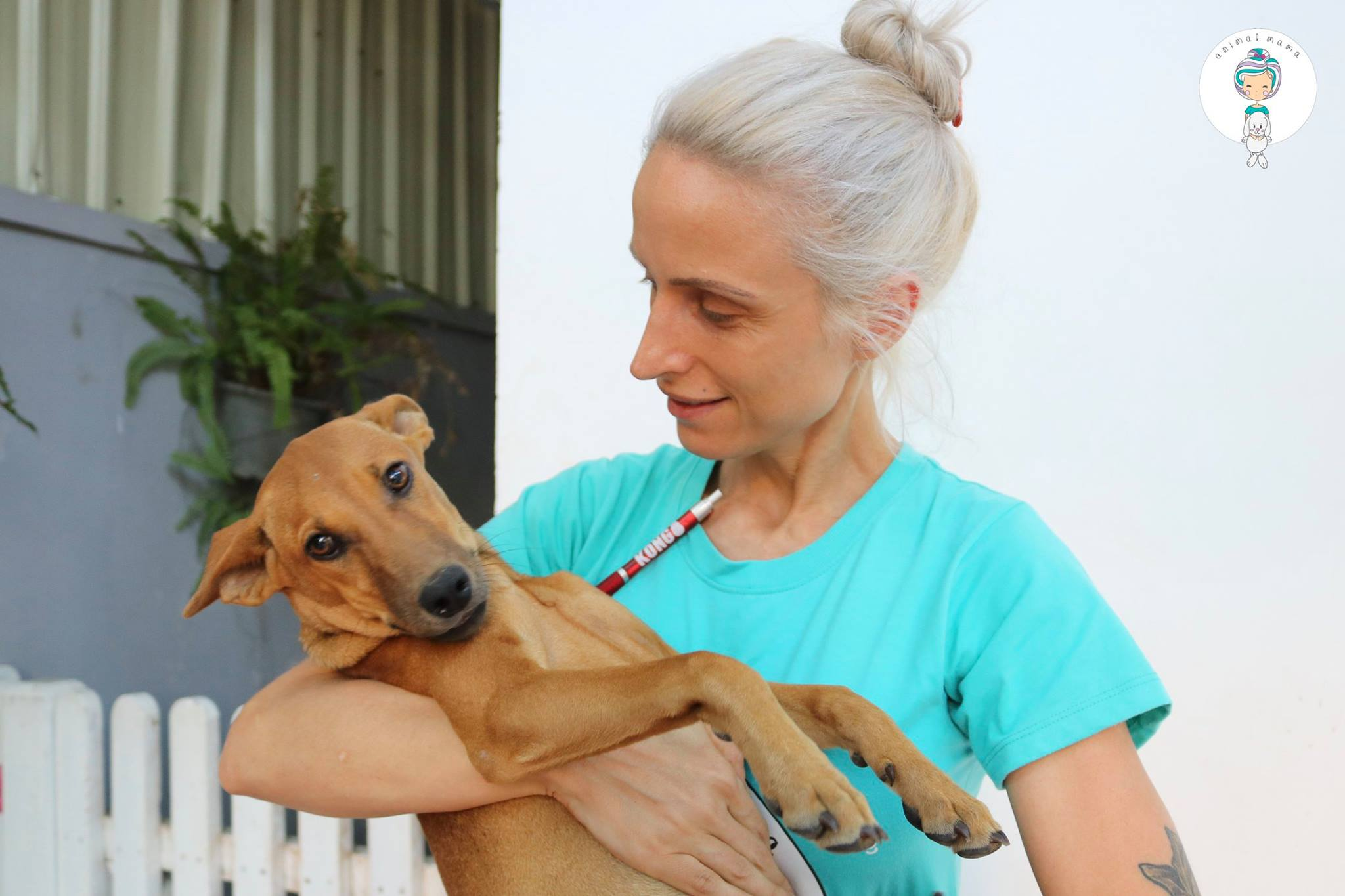 how to adopt a puppy cambodia