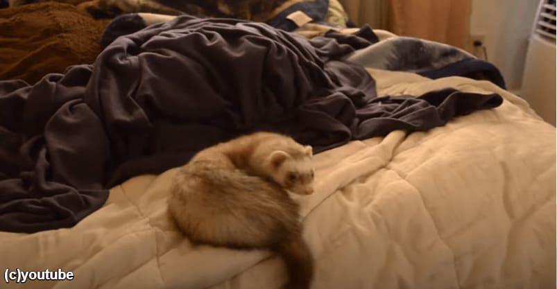 去ってしまう猫