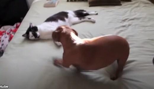 「あそんで、あそんでー!」とじゃれつく犬を、大人ない対応で冷静になだめる猫
