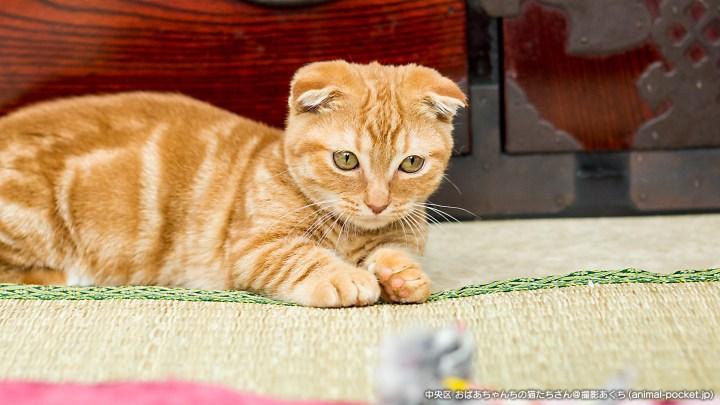 猫カフェ「おばあちゃんちの猫たち」
