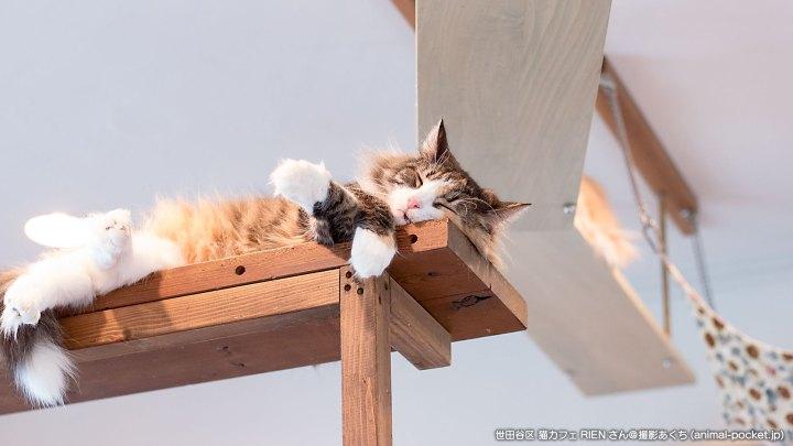 猫カフェ「RIEN」