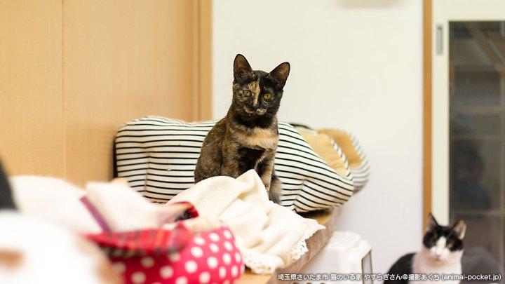 猫のいる家やすらぎ
