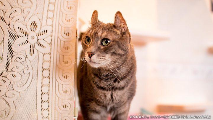 猫カフェニャンシー