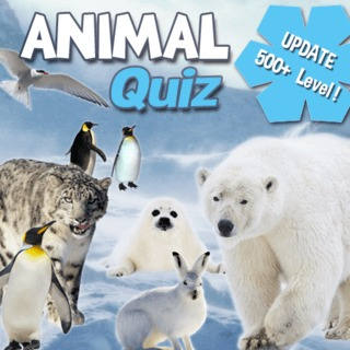 Guess the animals name!