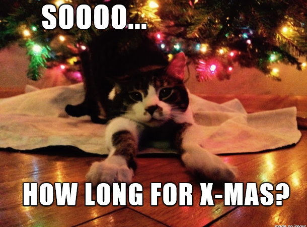 Lazy cute cat waiting for X-mas