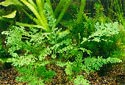 Click to learn about Aquarium Plants