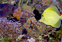 Click to learn about Aquarium Coral Reefs