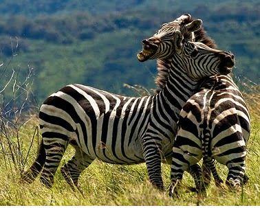 Dunia Binatang  Kehidupan aneka ragam marga satwa