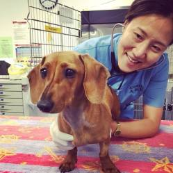 Twigg Emergency Vet Care Melbourne 24hr Pet Centre