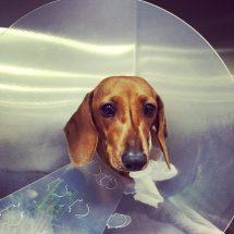 Twigg Pet Emergency Centre Melbourne Vet CARE