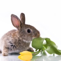 Bunnies and Other Delightful Creatures