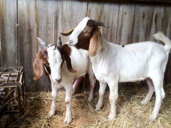 Rupert (R) and Thurman