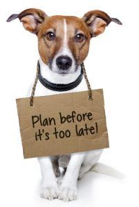 plan-dog