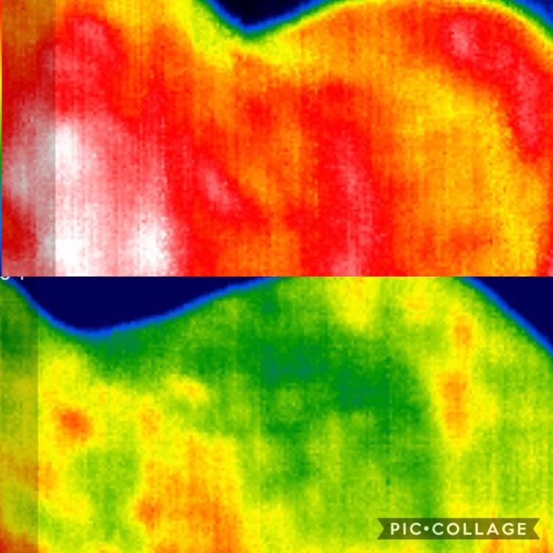 Equine Thermal Imaging