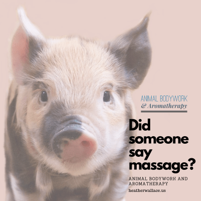 Pig Massage and Bodywork
