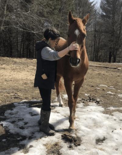 Equine Chiropractic New Jersey