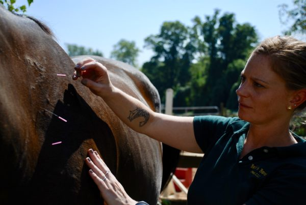 Animal Acupuncture Horse New Jersey