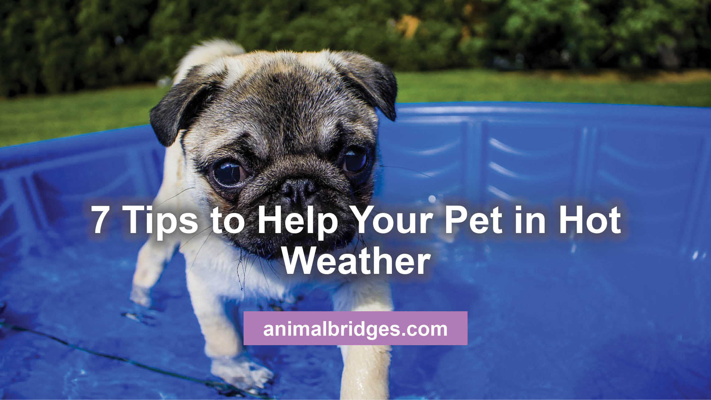 7 Tips For Making Your Dog Or Cat Comfortable In Hot Weather
