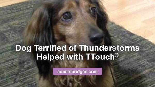Dog Terrified Of Thunderstorms Helped With Ttouch