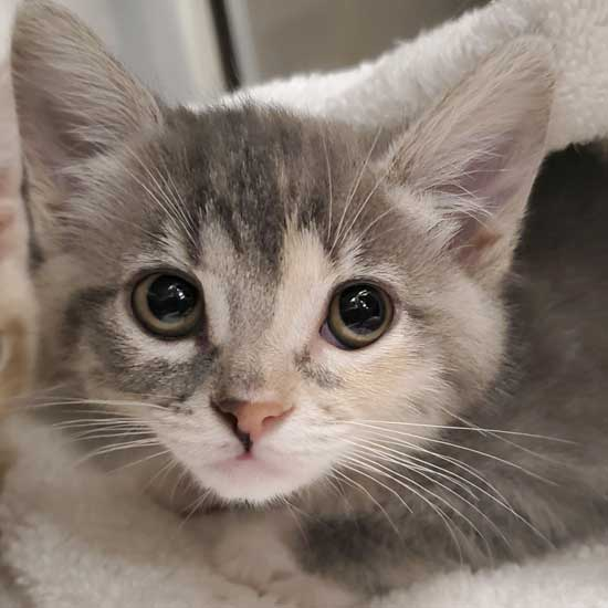 cat kittens for adoption