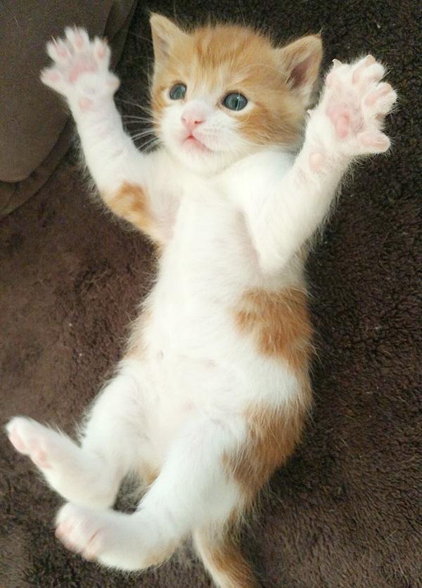 kitten adoption san diego