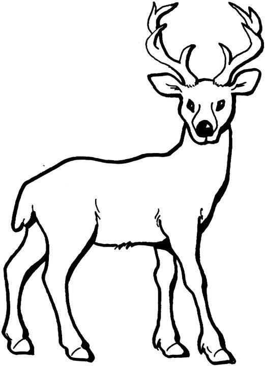 Deer Colouring Pages For Kids Animal Corner