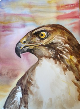 watercolor painting of a red-tailed hawk