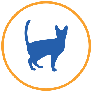 piani salute gatti senior