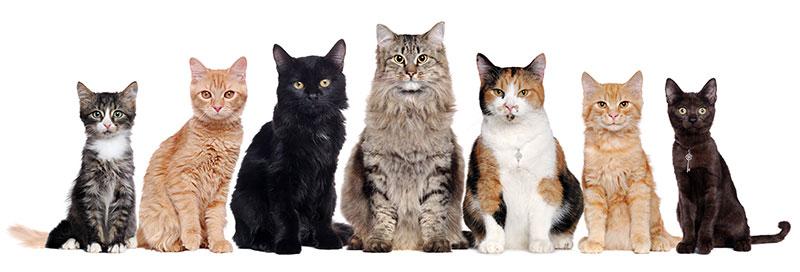 piani salute gatti