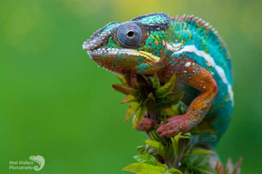 I am the Chameleon you call Spirituality. Watch me change.  Photo courtesy of www.angiwallacephotography.com