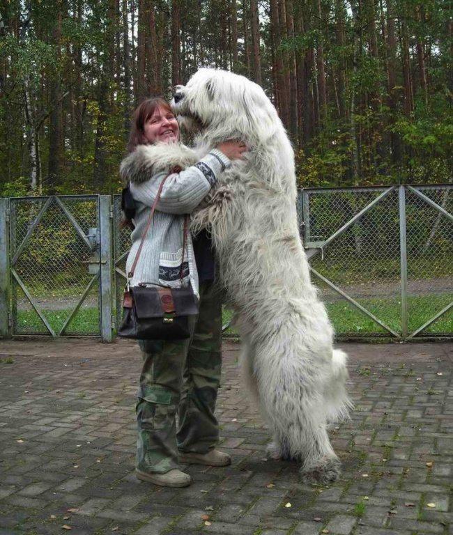 big-dog-1