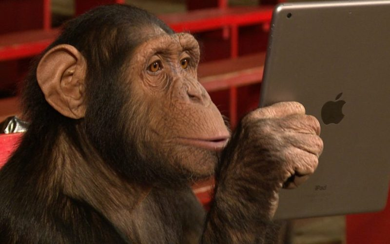 chimpanzees-making-prank-calls