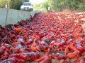 crabs-migrate