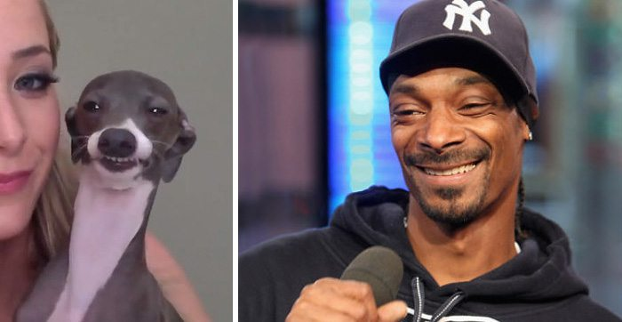 1-animals-that-look-just-like-famous-people