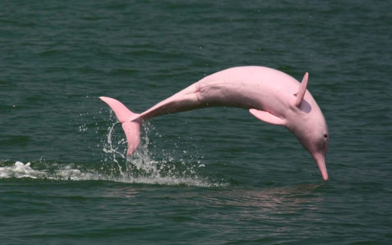 1-fairytale-pink-animals-that-are-real