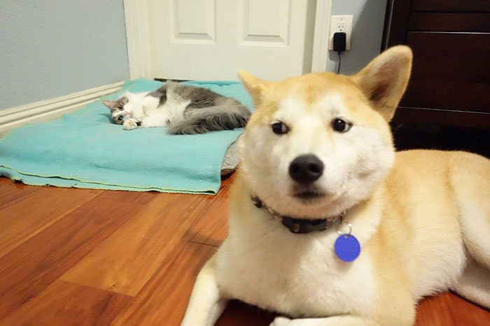 12-totally-careless-cats-stealing-dog-beds