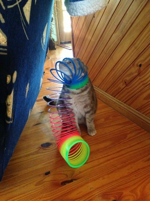 14-pics-proving-cats-can-get-stuck-in-anything