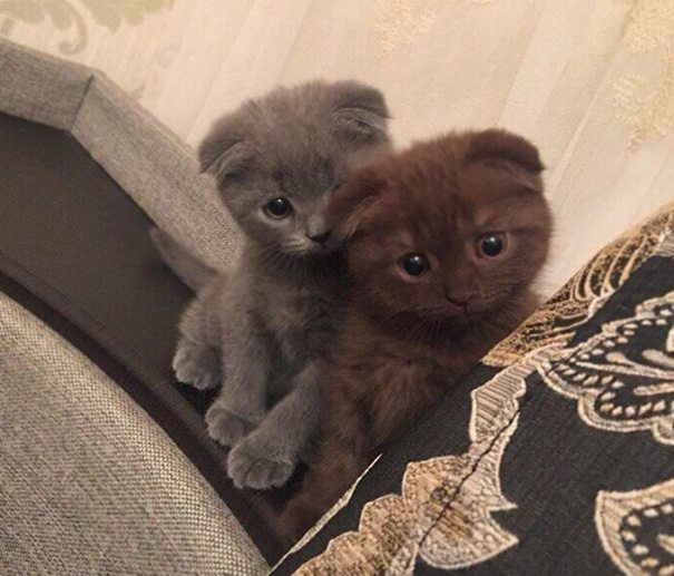 2-kittens-that-will-make-you-cry