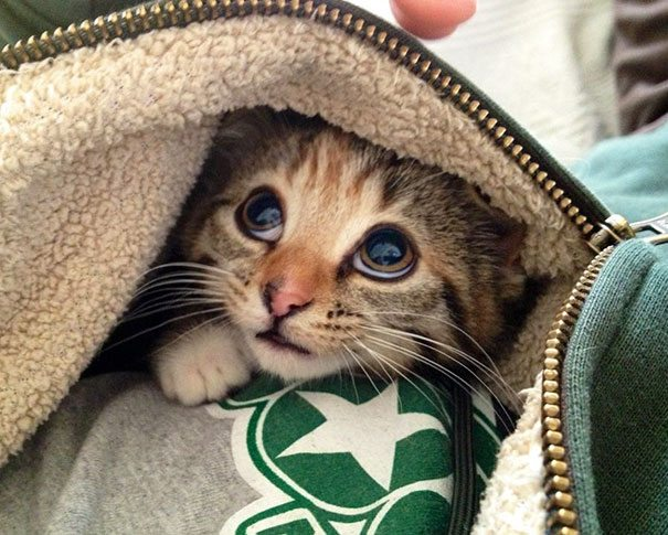 20-kittens-that-will-make-you-cry