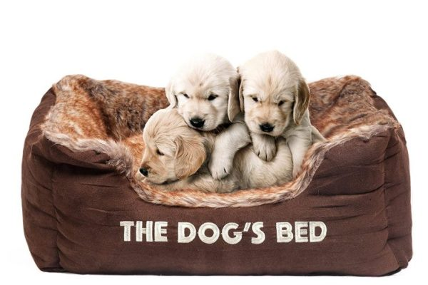 3-dog-bed-removable-hyper-allergenic-extremely-comfortable-e1479307739346
