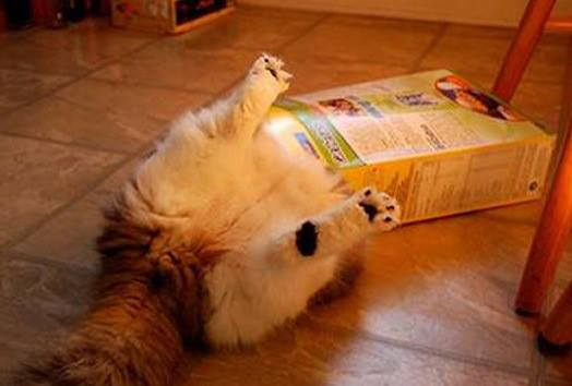 3-pics-proving-cats-can-get-stuck-in-anything