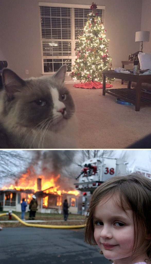 16-grumpy-pets-that-still-dont-have-the-christmas-spirit
