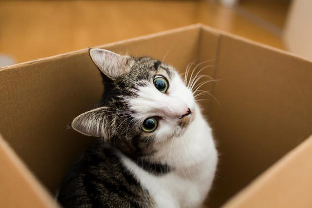 Cat in a boxcat in the box