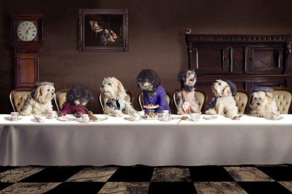 6-photoshopped-animals-surreal-universe