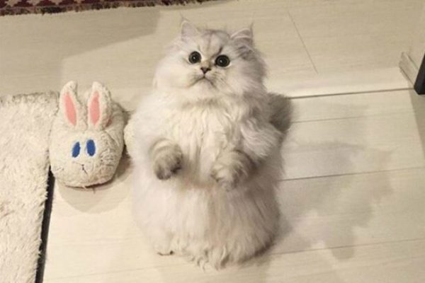 1-cats-that-were-born-to-shine-on-the-internet