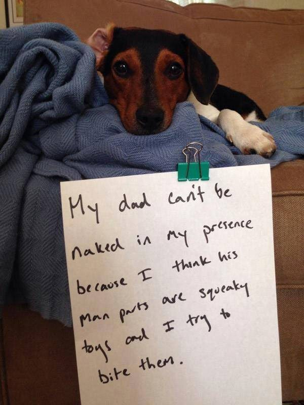 10-guilty-pets-ready-to-walk-on-hall-of-shame