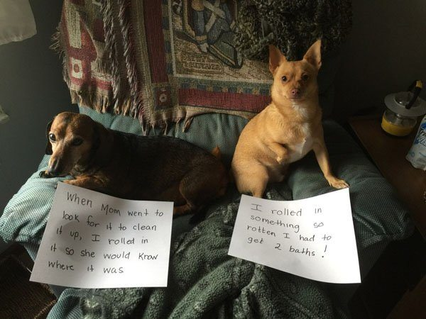 12-guilty-pets-ready-to-walk-on-hall-of-shame