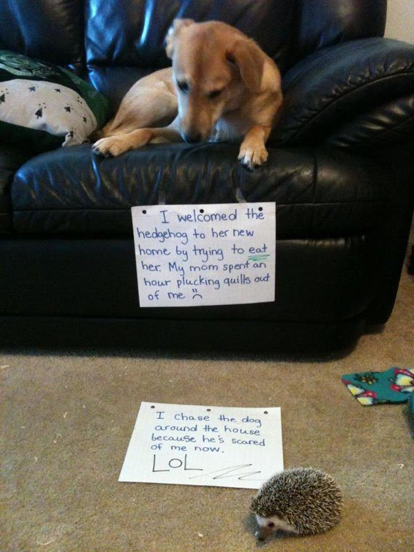 14-guilty-pets-ready-to-walk-on-hall-of-shame